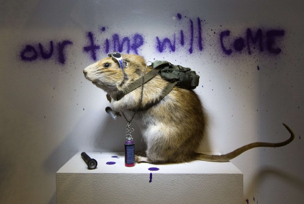 Słynny szczur Banksy'ego. Fot. AFP